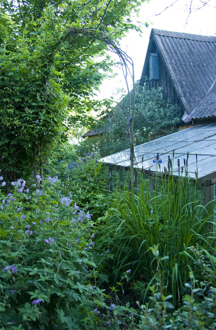 From the garden of Susan Trolle, Bornholm, Denmark, photo Sophia Callmer