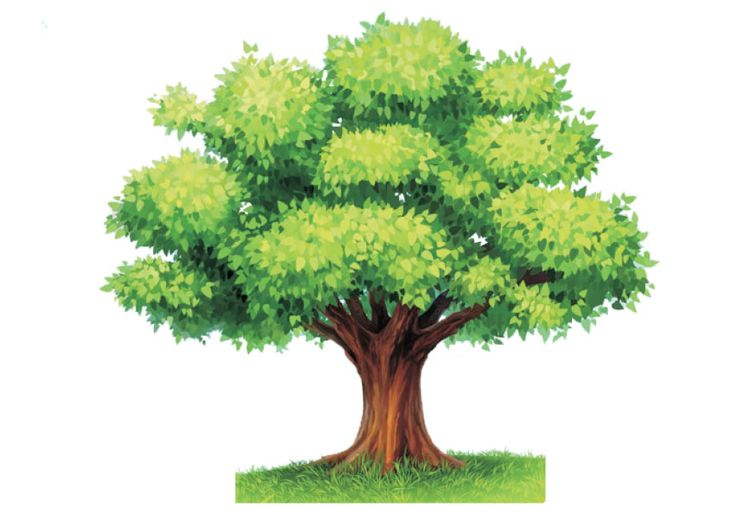 die besten 25 stammbaum arbeitsblatt ideen auf pinterest genealogie formen stammbaum. Black Bedroom Furniture Sets. Home Design Ideas