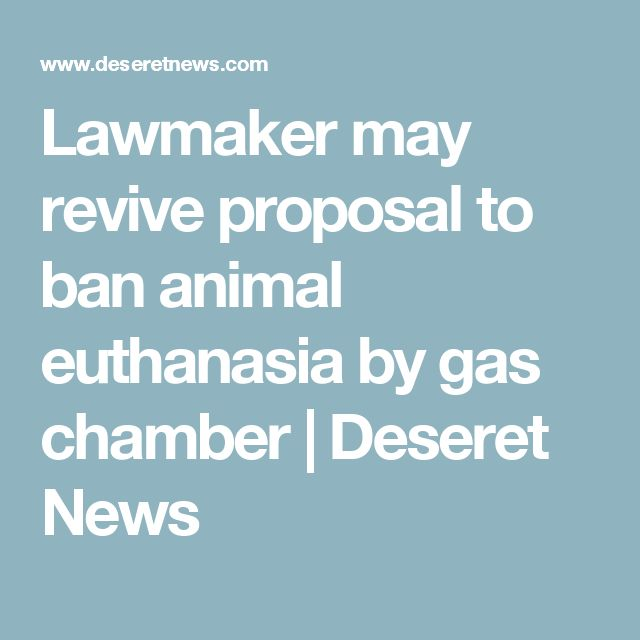 Lawmaker may revive proposal to ban animal euthanasia by gas chamber | Deseret News
