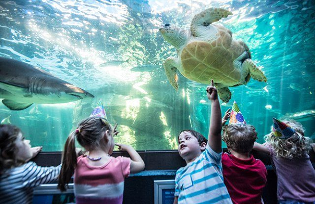 50 Things to do in Cape Town with Kids | Fun Children's Activities, Entertainment & Things for Kids to Do in Cape Town
