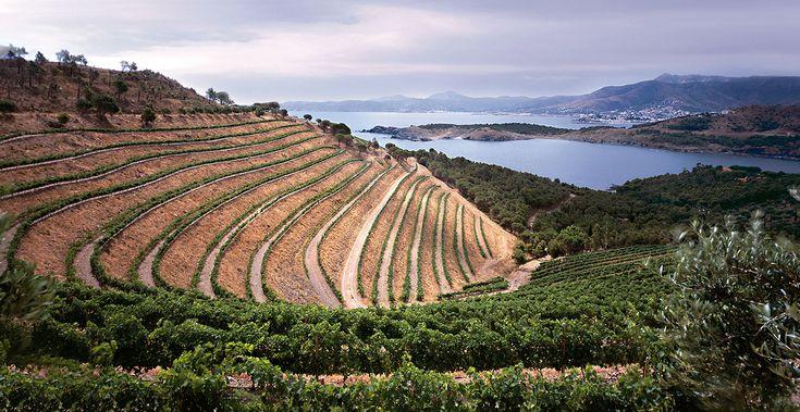 La Serra Albera est le nom donné à la partie orientale des Pyrénées, du haut de Portús à la mer Méditerranée. Elle sépare les grandes plaines de l'Alt Empordà et les montagnes du Roussillon et constitue la frontière franco-espagnole actuelle. Elle mesure environ 25 km de long. Dans la partie sud du massif des Albères se trouve deux zones bien distinctes: l'Ouest, le caractère de la végétation de l'Europe centrale...