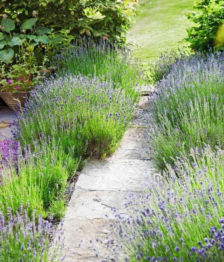 Quelles plantes choisir pour son jardin sec – idées et conseils utiles