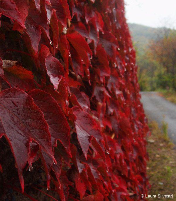 Red Leaves by lotus82.deviantart.com on @deviantART
