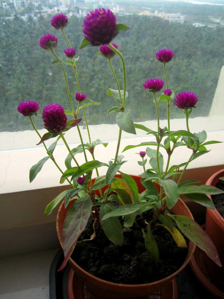 Garden Planting Ideas