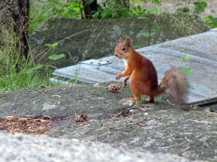 Työtön robotti!: Yllätetty orava