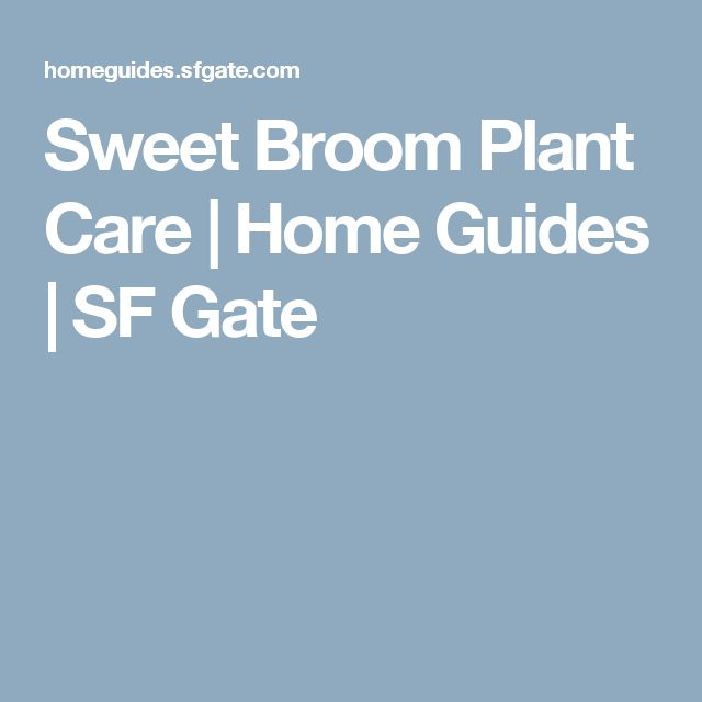 Sweet Broom Plant Care | Home Guides | SF Gate
