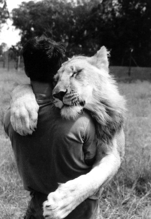 So sweet. Not sure if I am anthropomorphizing the lion or if it's eyes are really closed in utter love of this humanoid.
