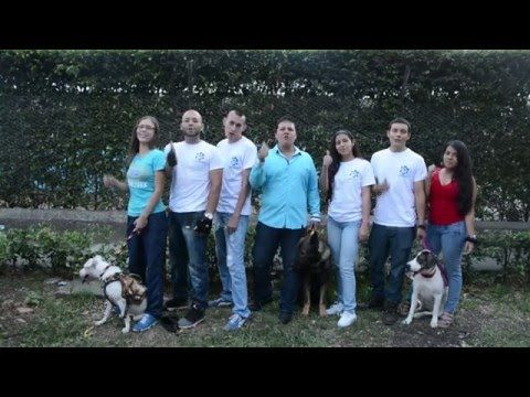 ¿Tu perro se orina por todas partes? - YouTube