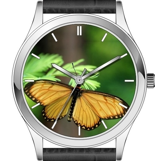 Butterfly watch series - Yellow Coster: Yellow Coster