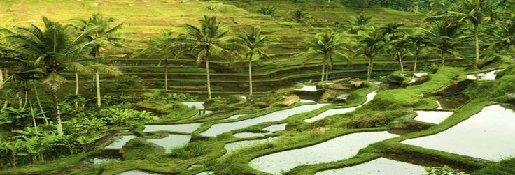 Ubud, #Indonesia guides and travel Information for Muslim Travellers   HalalTrip. www.halaltrip.com