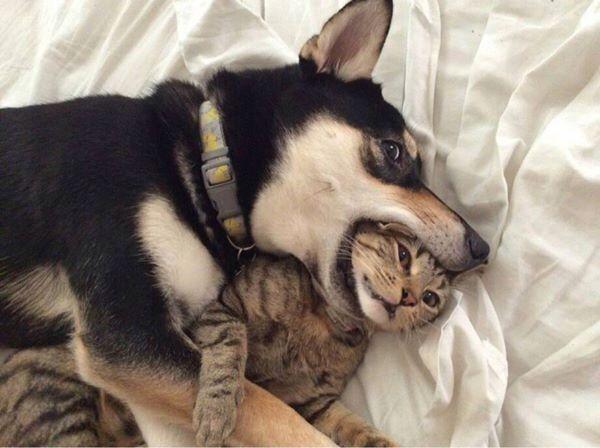 Cat got your tongue??