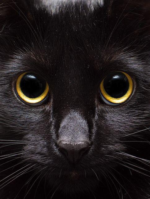 hypnoses eyes #black cat