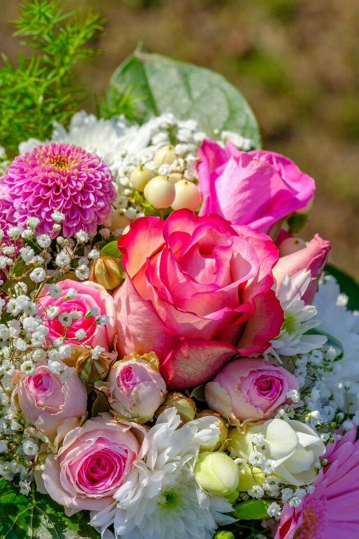 Фотографии с красивыми цветами