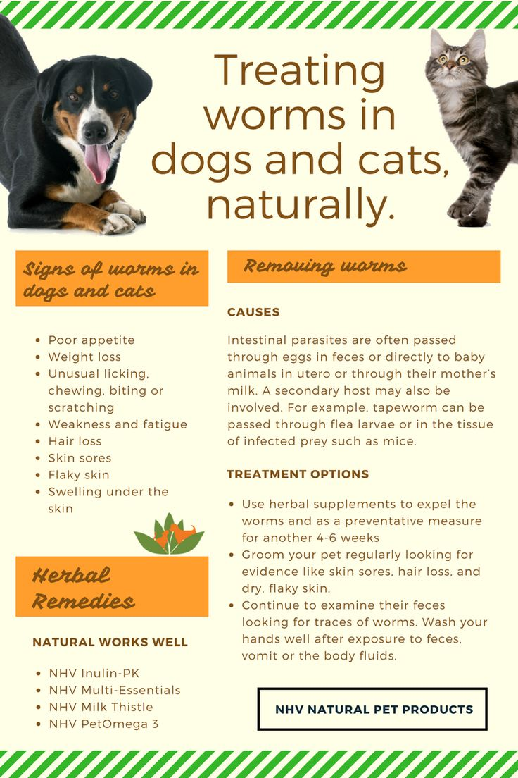 Deworming cats and dogs, naturally? Find the symptoms you need to watch out for, treatment suggestions for worms in pets and learn how you can help your pet recover. Our herbal remedies will help strengthen the affected pet's immune system and get rid of the parasites. Read everything about deworming your pets naturally on our blog.