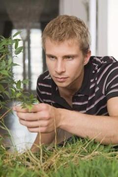 killing gnats on indoor plants 3