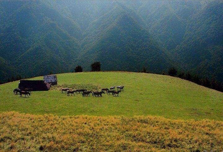 Retezat mountains .