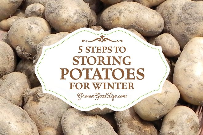5 Easy Steps to Storing Potatoes   Grow a Good Life