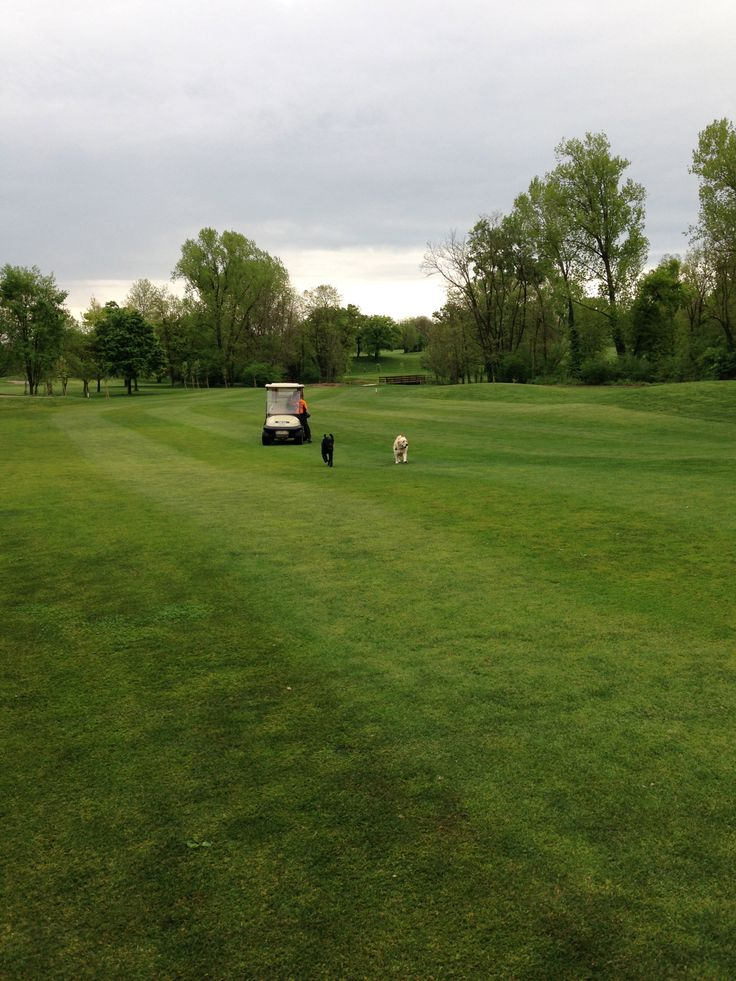 Apollo and Kira at the Golf Club Udine - Fagagna, Italy