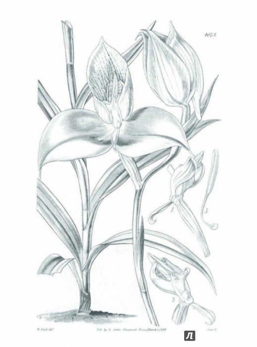 Иллюстрация 9 из 27 для Особенная раскраска. Королевский ботанический сад | Лабиринт - книги. Источник: Лабиринт