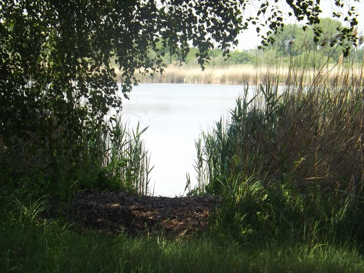 Lake in Angermünde (Uckermark)