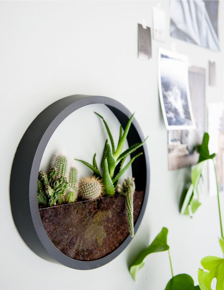 DIY wall clock terrarium More