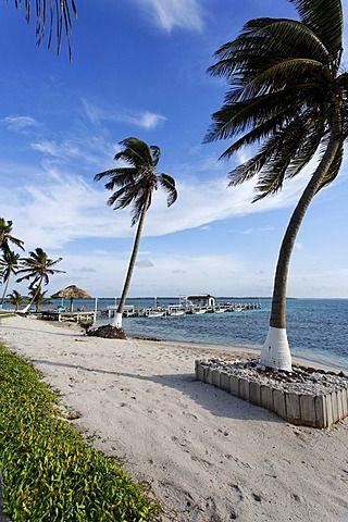 Playa con palmeras y un embarcadero, Turneffe Flats, Turneffe Atoll, Belice, América Central, el Caribe