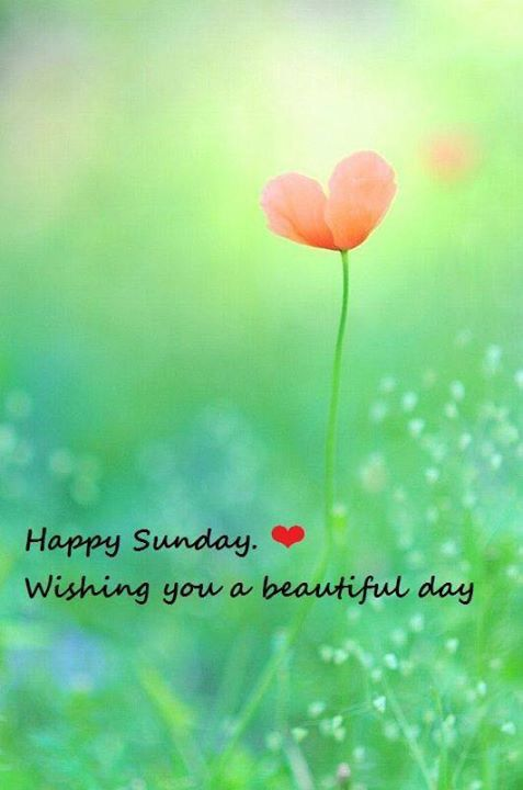 Happy Sunday .  Wishing you a beautiful day