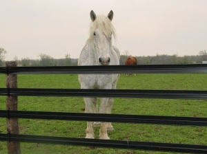 5 Tips For First Time Fencers! Helpful Ideas With Your Horse Fencing!