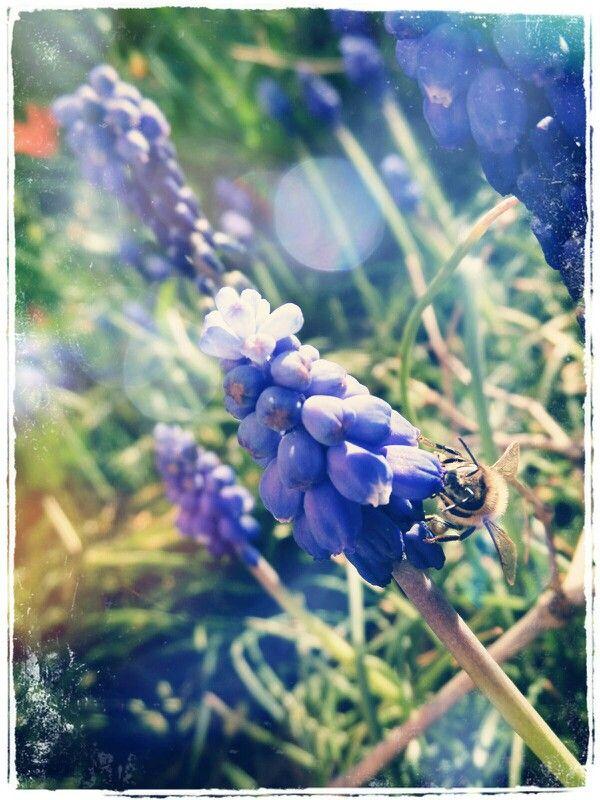 Honey-bee :)