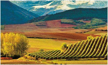 The Rioja countryside