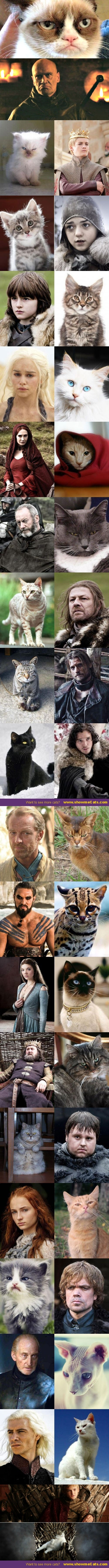 The ultimate Game of Thrones Cats Doppelganger - this is pretty funny! This must have taken a LONG time to compile!
