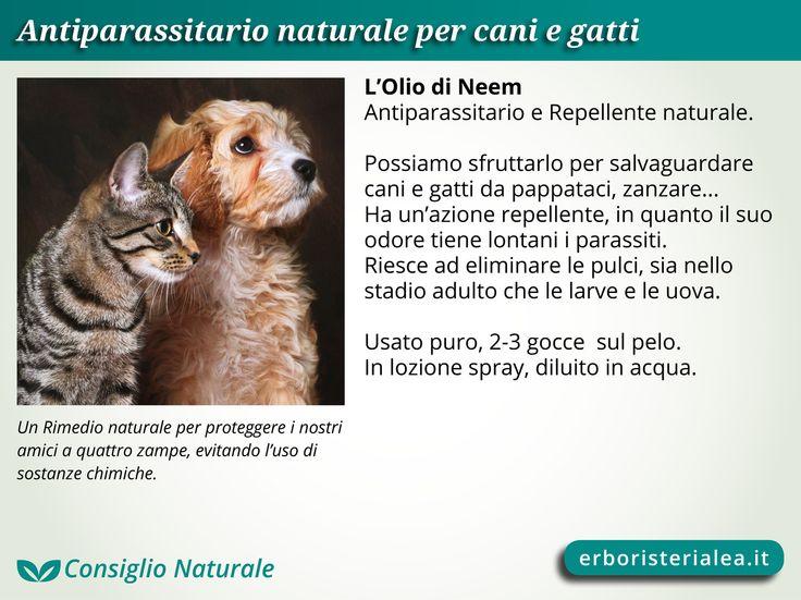 L'Olio di Neem è un Rimedio Naturale per proteggere #cani e #gatti dai parassiti