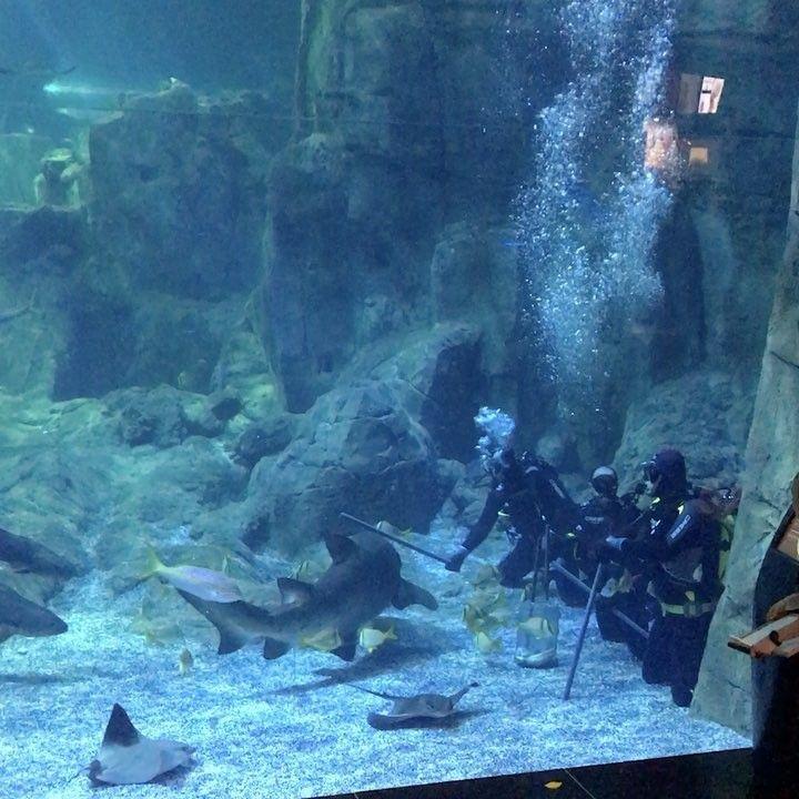 Köpek balığı beslenme saatlerini öğrenmek İstanbul Akvaryum 'u gezmek için bilgi alın@istanbulakvaryum