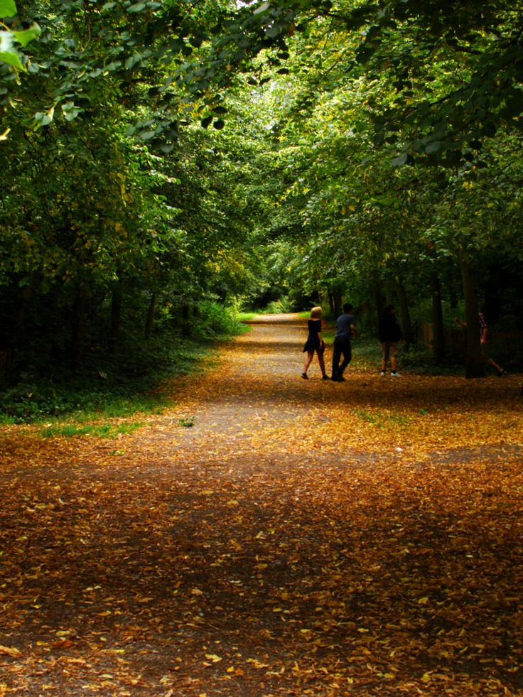 Holland Park, the most romantic and densely wooded of the multitude of Lomdon parks......