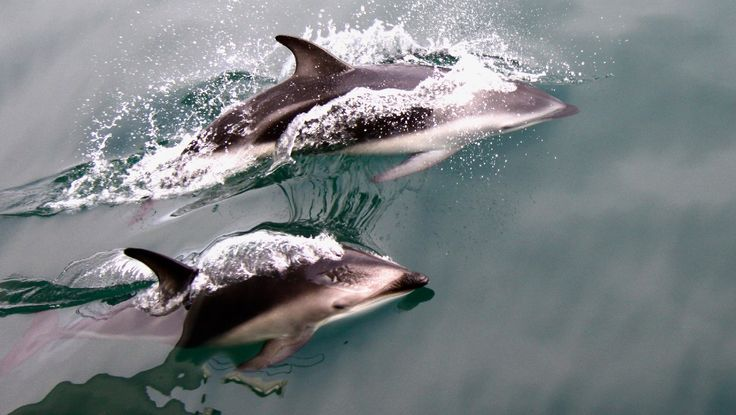 Marlborough has an abundance of birdlife, marinelife and wildlife. Come meet the locals.