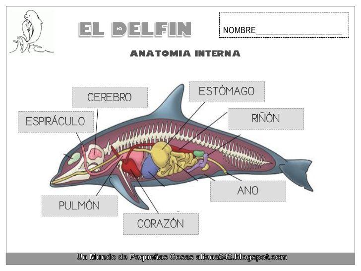 NOMBRE_____________________Anatomia interna