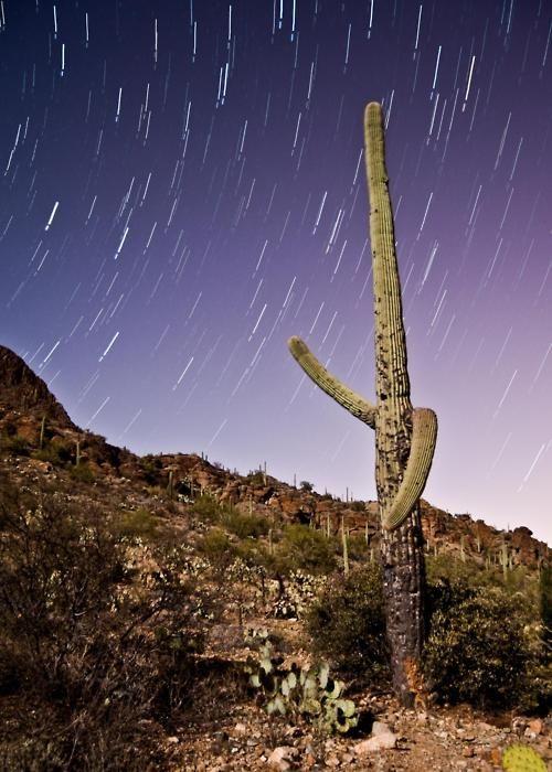 Saguaro National Park in Tucson, Arizona. Star trails and Arizona... A great