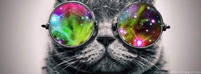 Portada para Facebook de Gatos Graciosos con lentes | Portadas para Facebook
