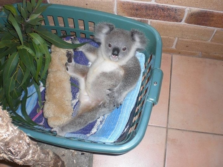 happy ending massage mom Port Macquarie