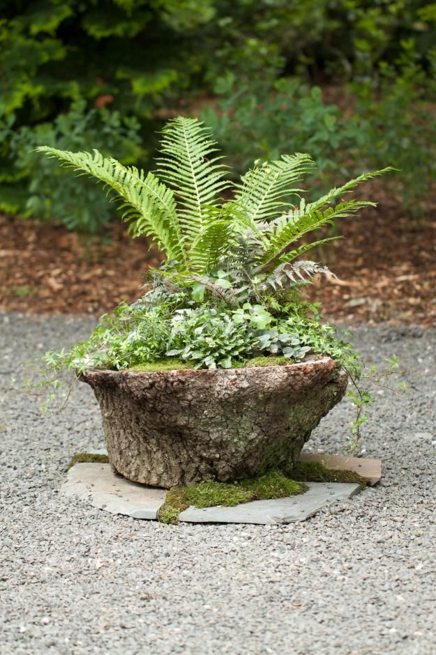 Idea: Hollow out existing tree stumps in yard. Use plantings in flower pots. Cover surrounding area with moss.