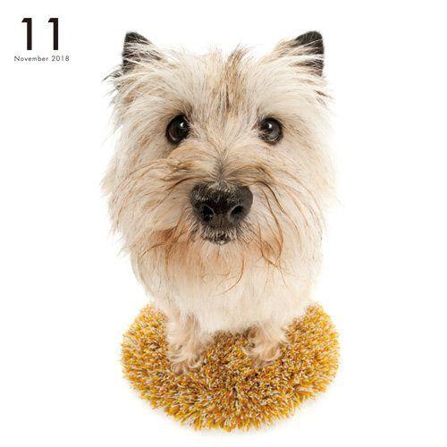 Artlist Collection The Dog Cairn Terrier Calendar Cairn Terrier
