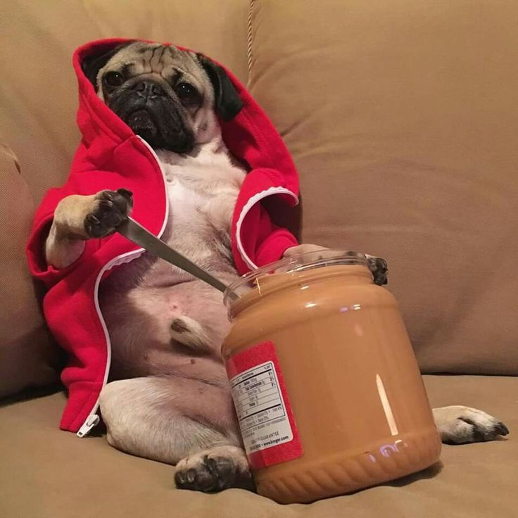 """I eat my peanut butter by the spoonful"" - Doug the Pug"