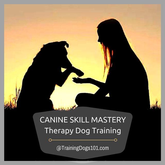 Canine Skill Mastery: Therapy Dog Training
