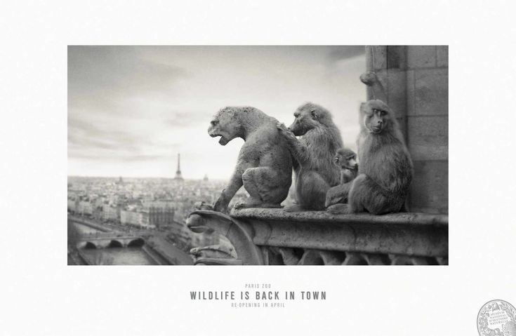 Nice ad by Publicis Conseil Agency. Great connection between Zoo (wild animals) and location (Paris)  @ Notre-Dame. Paris Zoo: Wildlife is back in town.
