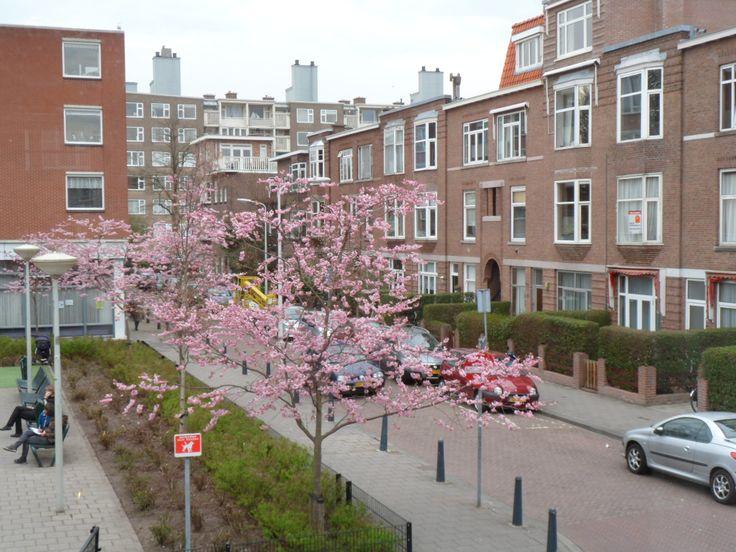 Bloesemboompjes in bloei eind maart