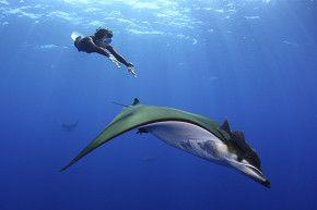 Juli'18: Azoren-Tauchsafari mit der ProWin Nature Explorer #azoren #tauchsafari #prowin #nature #explorer #wirodive #tauchreisen #erlebnisreisen #touchedbynature #scubakids #oceanlovers #born2dive #großfisch #pottwal #mantas #erlebnis #abenteuer #urlaub