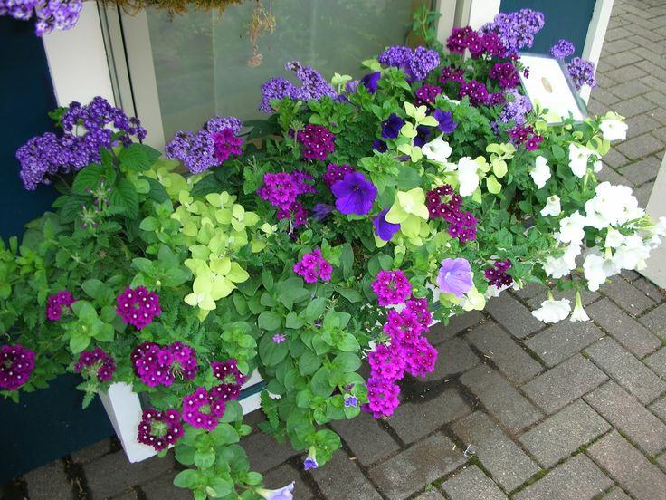 1697 best images about garden container gardening on pinterest window boxes container - Best flower combinations for containers ...