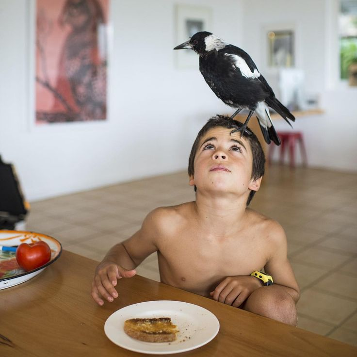 Penguin the Magpie: The Odd Bird With Its Own Instagram #inspiration #photography