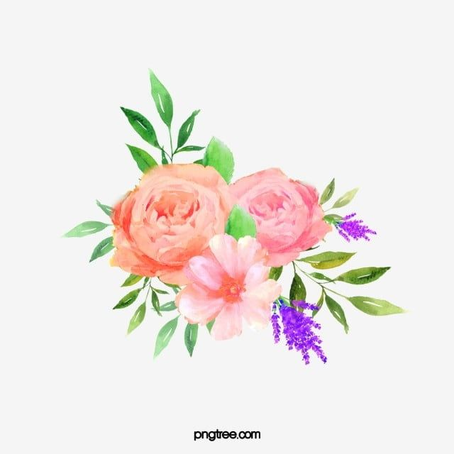 Beautiful Floral Watercolor Peony Flower Cluster Watercolor Clipart Flower Clipart Flowers Png Transparent Clipart Image And Psd File For Free Download Flower Clipart Watercolor Peonies Floral Watercolor