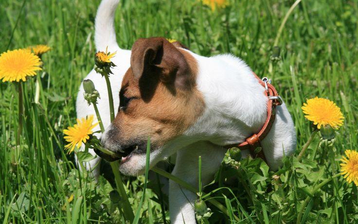2017-03-15 - HD Widescreen dog pic - #1717395